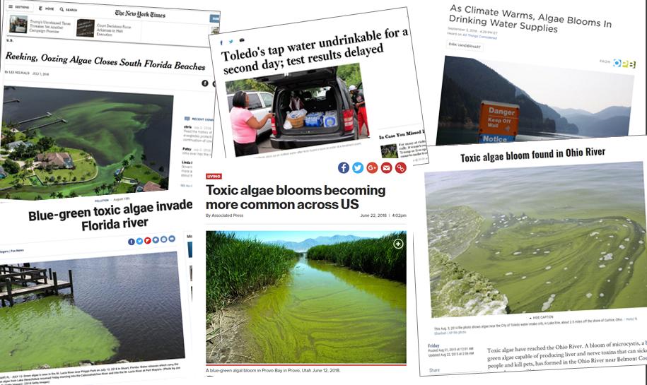 Toxic Algae in the News